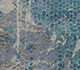 Jaipur Rugs - Hand Knotted Wool and Bamboo Silk Blue SRB-718 Area Rug Closeupshot - RUG1074549